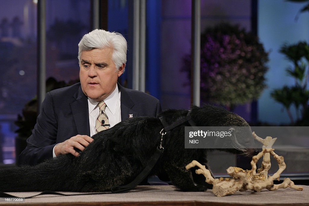 Host Jay Leno with a binturong on April 5, 2013 --
