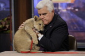 Host Jay Leno with a baby lion on January 31 2014