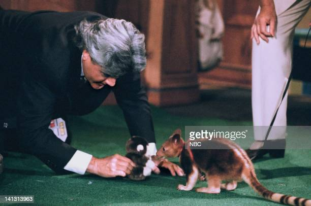 LENO Episode 745 Air Date Pictured Host Jay Leno with a Wallaby on August 7 1995 Photo by NBCU Photo Bank