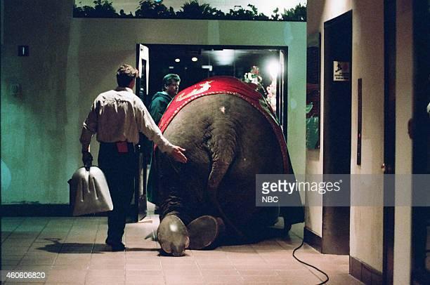 Crew members usher an elephant on set on December 18 1995