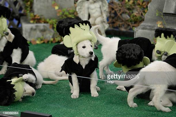 BRIEN Episode 94 Air Date Pictured The Tonight Show Halloween MiniDose of Joy puppies dressed as Frankenstein on October 30 2009