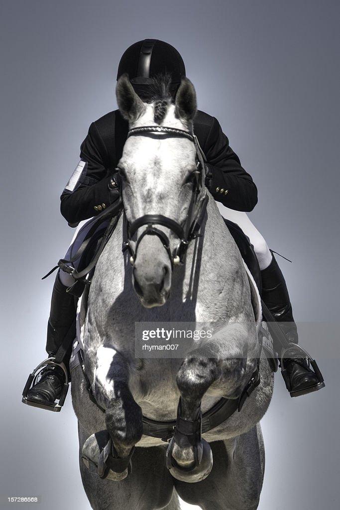 Equestrian jumper : Stock Photo