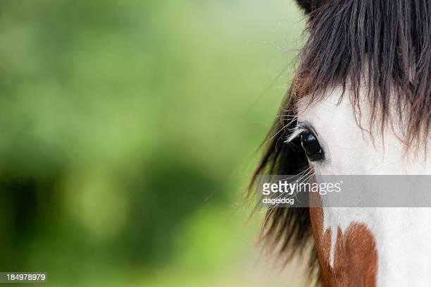 equine Schönheit