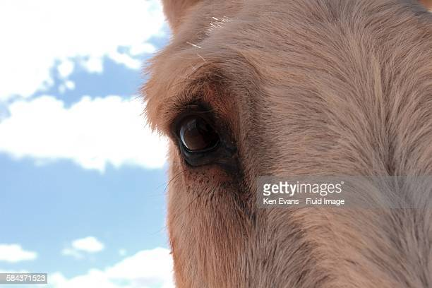 Equine eye close up