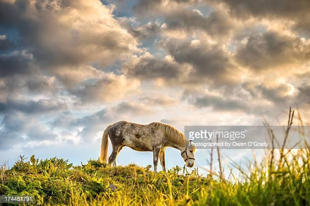 Equine sky