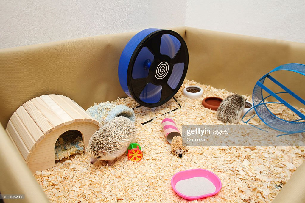 equipment-for-african-pygmy-hedgehog-pic