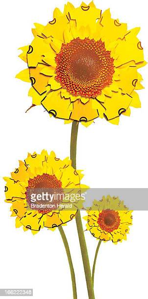 Eric Chapman color illustration of sunflowers with Tshirt petals
