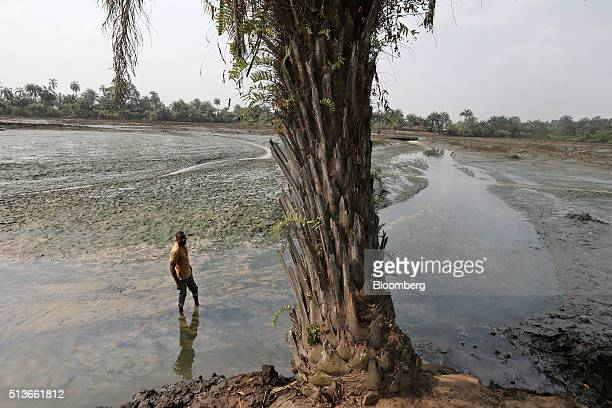 Eric Dooh a fish farmer stands in the oil polluted mud of his fish ponds affected by an oil spill in 2004 in Goi Nigeria on Wednesday Jan 13 2016...