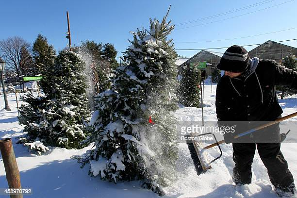 Eric Muller brushes down the Christmas trees after freshly fallen snow Wednesday morning at Mahoney's Garden Center in Winchester
