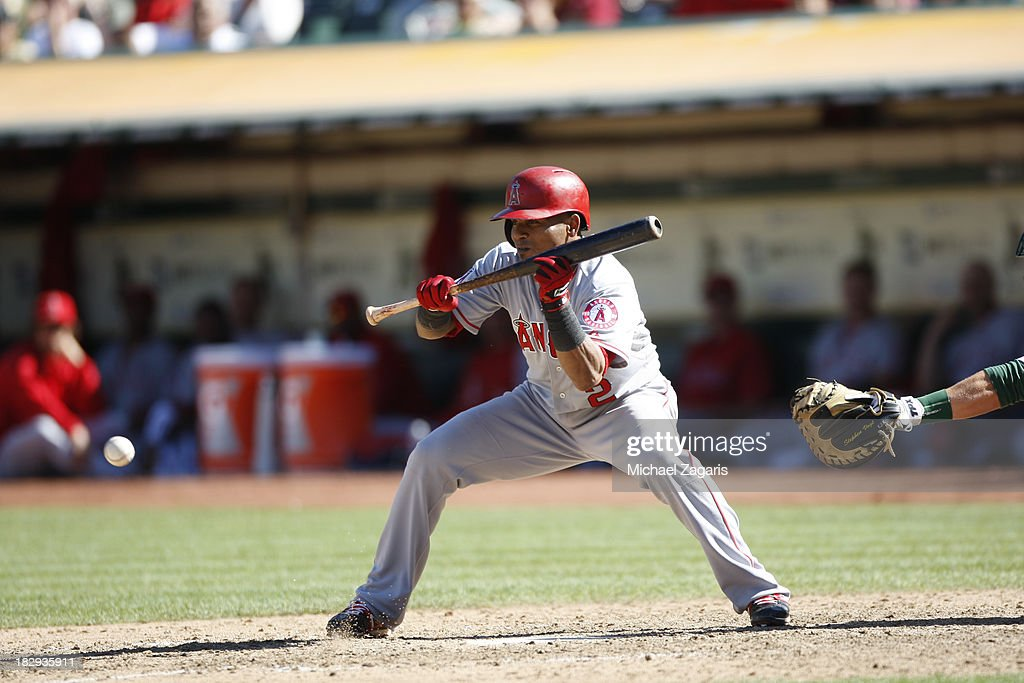Erick Aybar of the Los Angeles Angels of Anaheim bunts during the game against the Oakland Athletics at Oco Coliseum on September 18 2013 in Oakland...