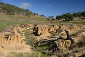Erosion gully in farmland, Tasmania, Australia