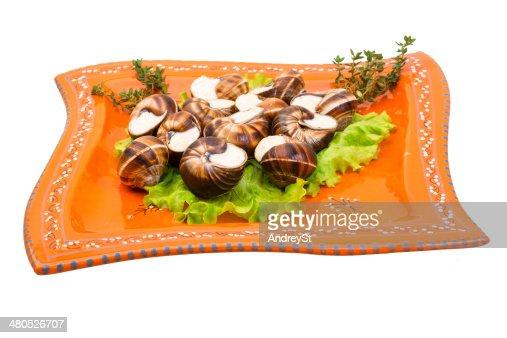 Escargot : Stock Photo