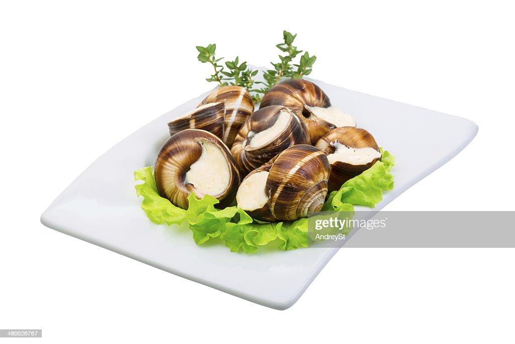 Escargot : Stockfoto