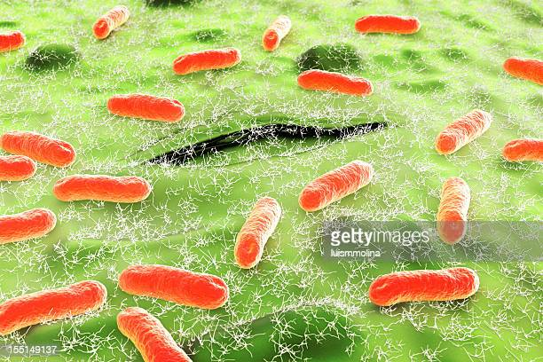 (E Coli Escherichia.  Coli.)