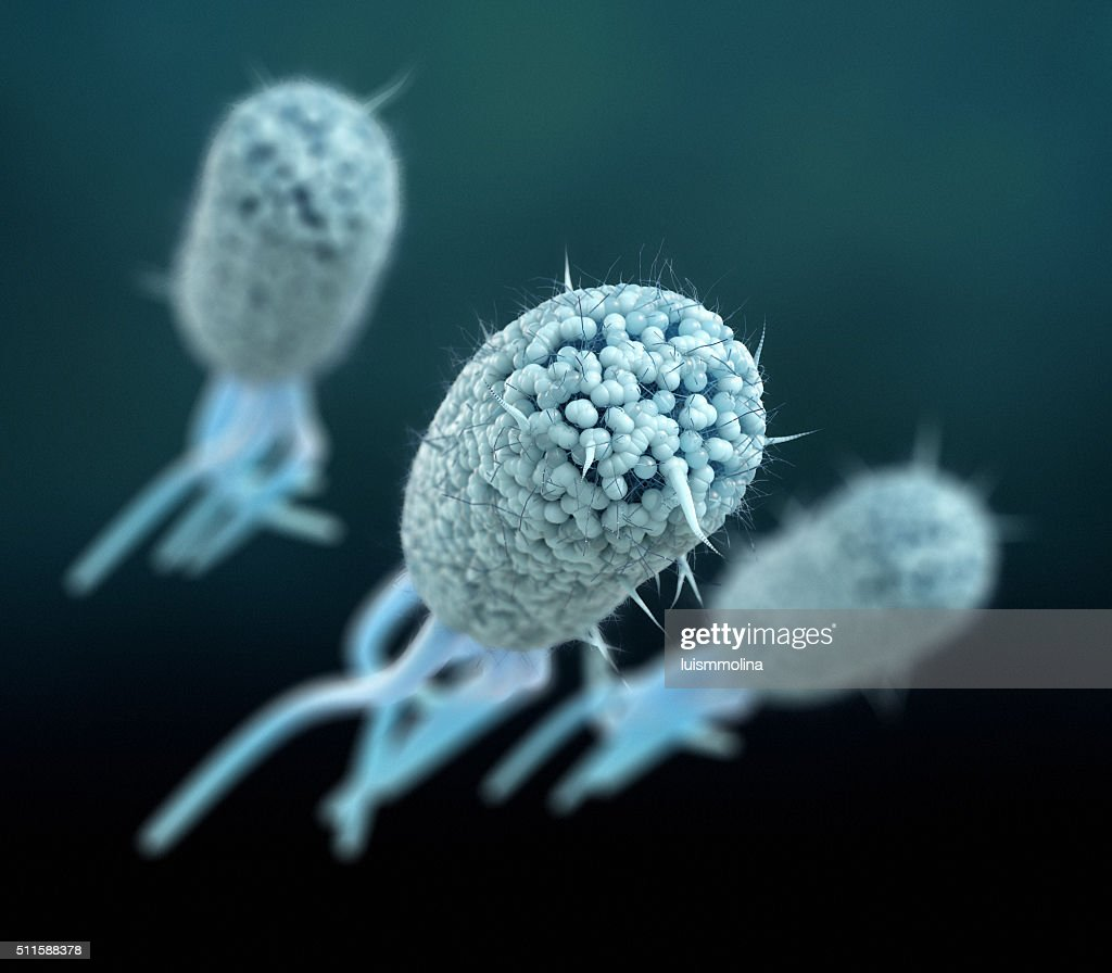 Escherichia Coli (E. Coli.) : Stock Photo