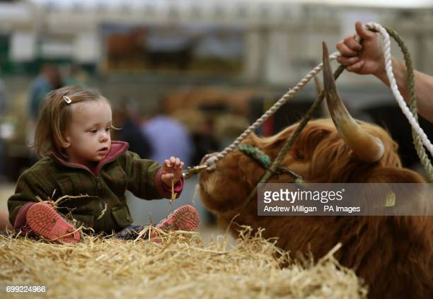 Esme Buckle from Dumfries watches a Highland Cow as preparations are made for the start of the 177th Royal Highland Show in Edinburgh being held from...
