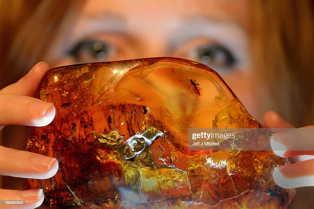 Esme Haigh from National Museum Scotland holds a 15-20million year old piece of Mexican amber with a wasp inclusion on view at the Amazing Amber exhibition on May 9, 2013 in Edinburgh, Scotland. The exhibition runs from 10th May until the 8th September it contains 320 objects with over half having never previously been shown.