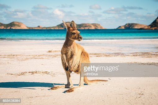 Esperance Kangaroo beach : Stock Photo