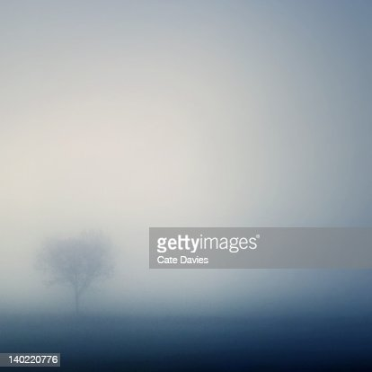 Ethereal tree : Stock Photo