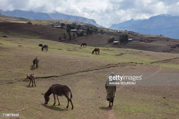 Ethiopia, Woman walking on a path in the Simien mountains