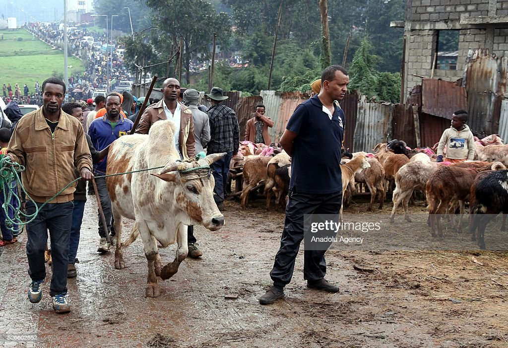 Ethiopian Orthodox Christians are seen at Asko Market during the Holy Saturday ahead the Easter in Addis Ababa, Ethiopia on April 30, 2016. Ethiopian Orthodoxes, who has been fasting without eating any food of animal origin last 55 days, buy bovines, sheep and goats ahead of the Easter will be celebrated on tomorrow.