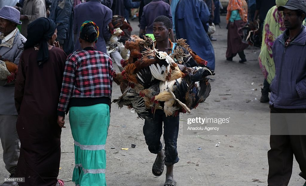 Ethiopian Orthodox Christians are seen at Sholla livestock market during the Holy Saturday ahead the Easter in Addis Ababa, Ethiopia on April 30, 2016. Ethiopian Orthodoxes, who has been fasting without eating any food of animal origin last 55 days, buy bovines, sheep and goats ahead of the Easter will be celebrated on tomorrow.
