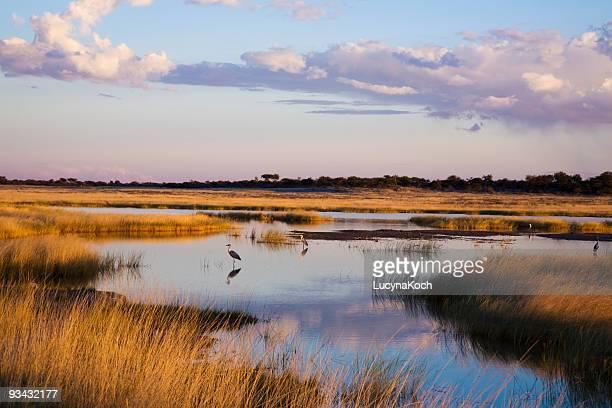Etoscha Landschaft