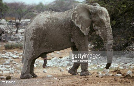 способ ловли стояк у слона фото
