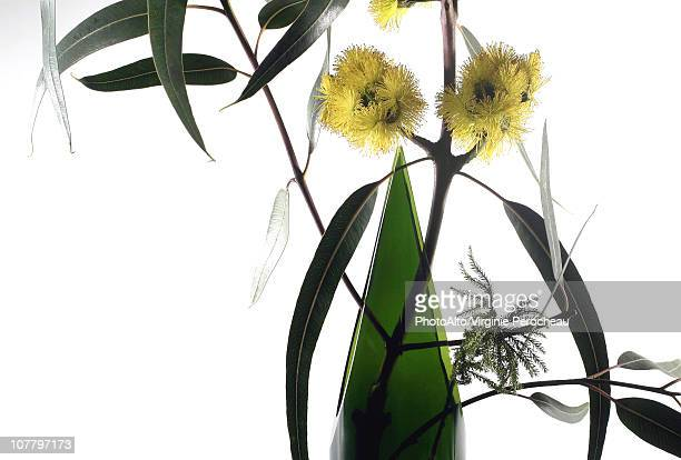 Eucalyptus branch in vase