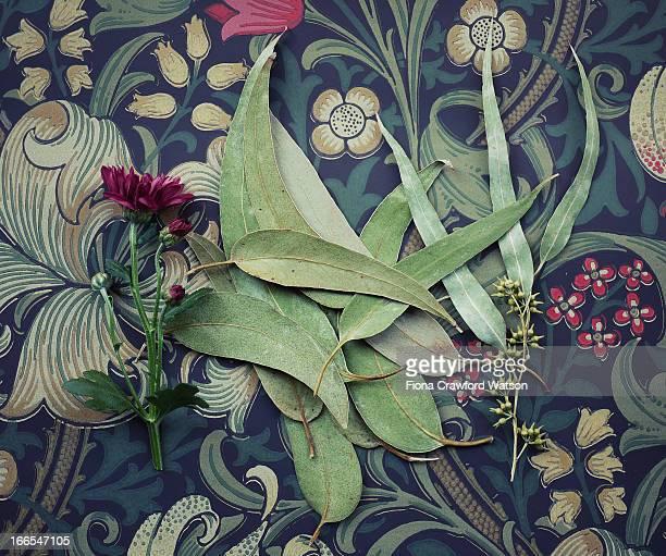 Eucalyptus leaves and flower lying on wallpaper