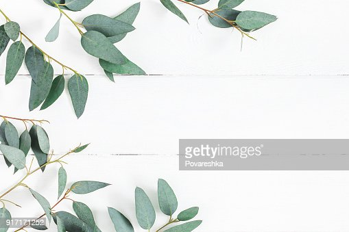 Eucalyptus leaves on white background. Flat lay, top view : Stock Photo