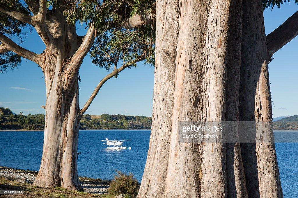Eucalyptus trees and seaplane, Te Anau