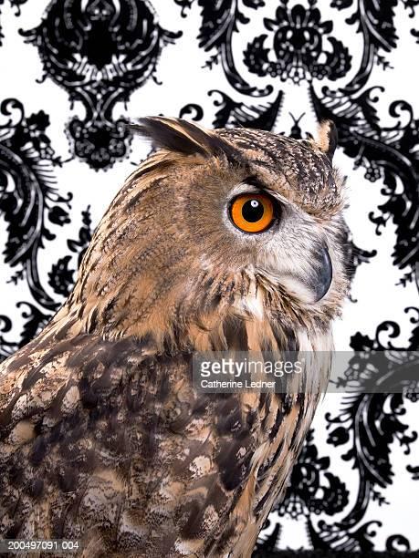 Eurasian Eagle Owl (Bubo bubo) against wallpaper