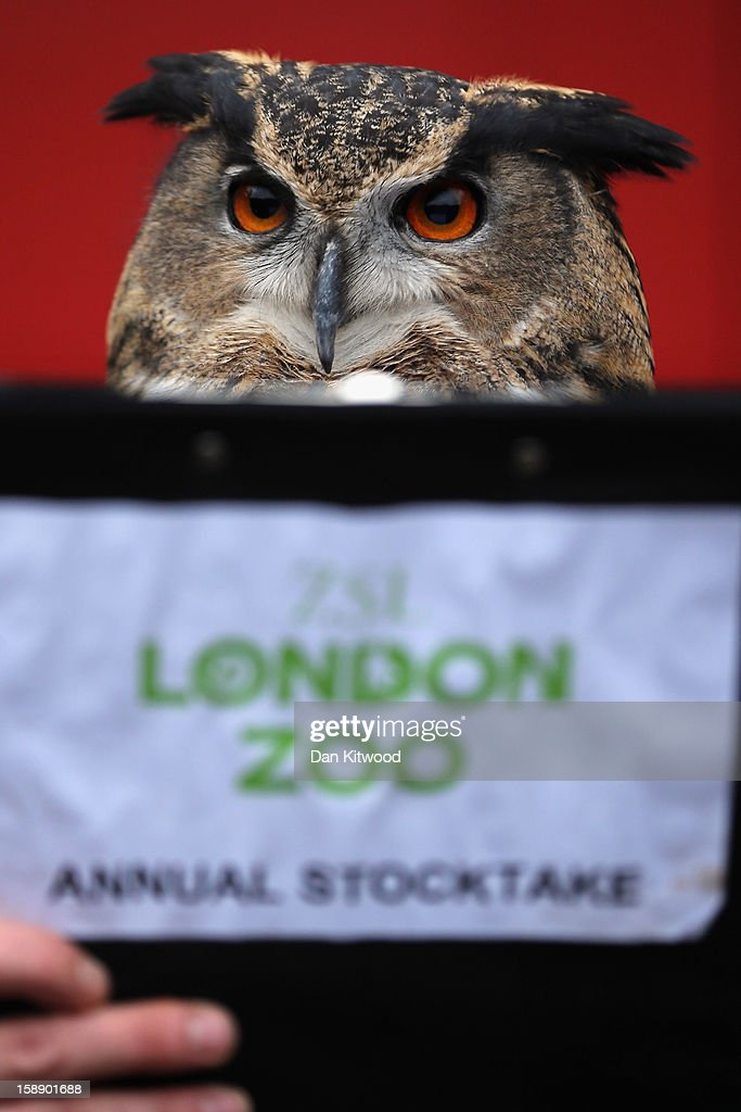A Eurasian Eagle Owl is posed up in front of a clipboard during London Zoo's annual stocktake of animals on January 3, 2013 in London, England. The zoo's stocktake takes place annually, and gives keepers a chance to check on the numbers of every one of the animals from stick insects and frogs to tigers and camels.