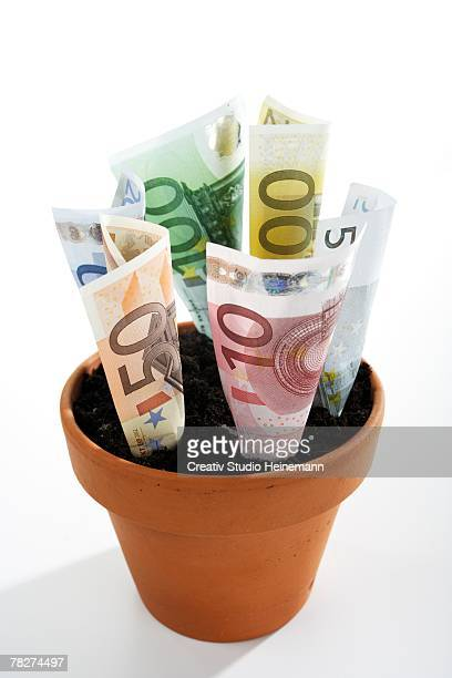 Euro notes growing in plant pot