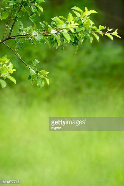 Europe, Germany, Bavaria, View Of Apple Tree Branch And Leaves Leaves In Countryside