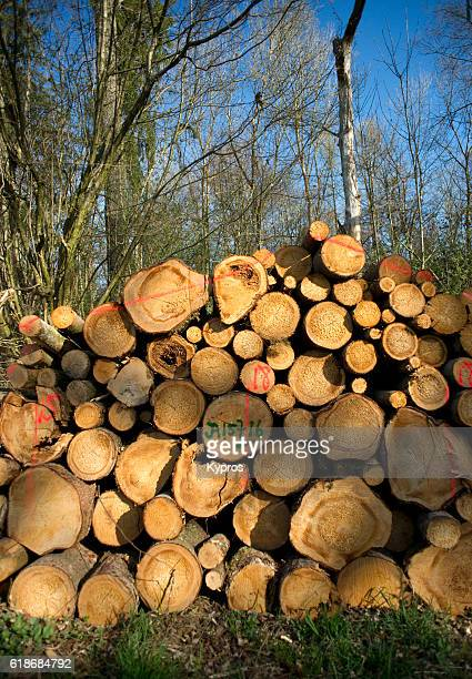 Europe, Germany, Bavaria, View Of Pile Of Logs, Bavarian Logging Industry