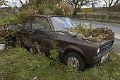 Europe, Great Britain, England, Lake District, rusty car overgrown with plants by the side of a road