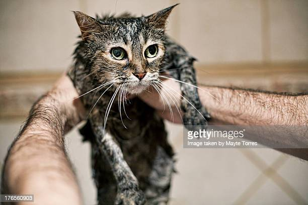 European cat in shower