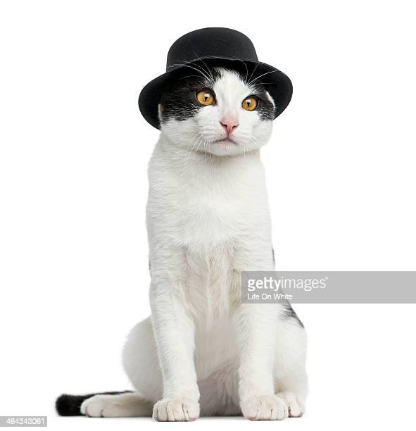 European cat wearing a top hat, sitting