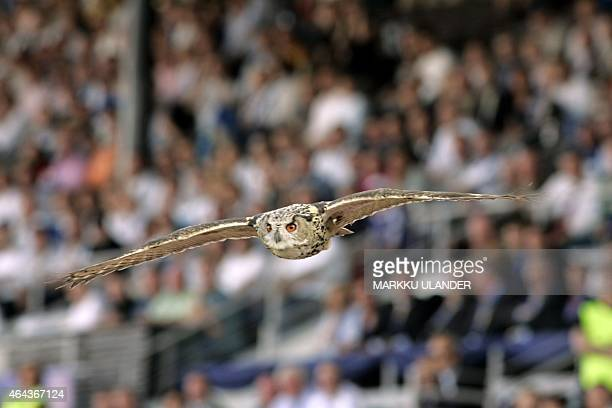 A European eagle owl the world's largest owl flies around the pitch and interrupts the Group A Euro 2008 qualifying soccer match Finland vs Belgium...