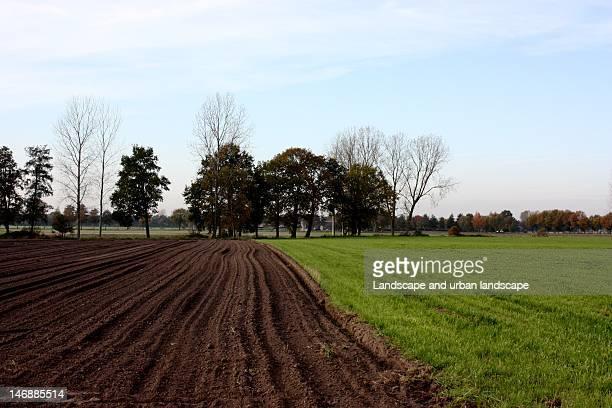European fields