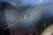 A European garden spider sits in its net on August 22 2014 in Berlin The spider's varieties are common across Europe and North America AFP PHOTO /...