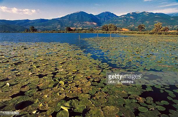 European White Waterlily on Lungo lake Natural Preserve of Lungo and Ripasottile lakes Lazio Italy
