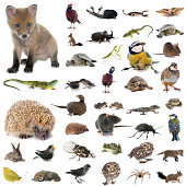 european wildlife in front of white background