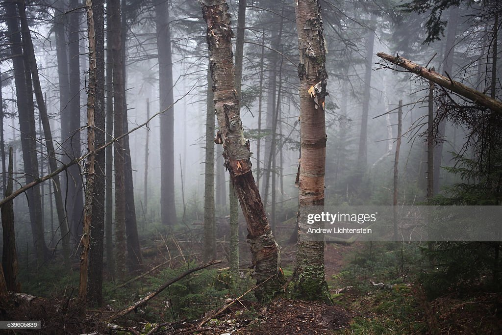Evan's Notch is a mountain pass that sits in the White Mountain National Forest along the MaineNew Hampshire border and is closed in the winter birch...