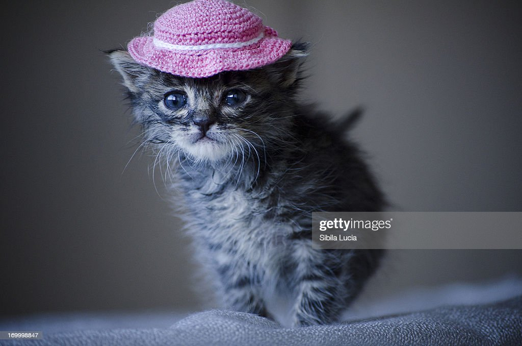 Gatito con 15 dias de vida posando con gorrito.