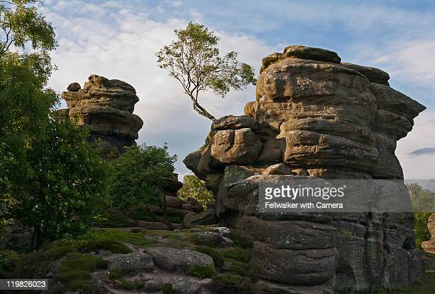 Evening at Brimham rocks