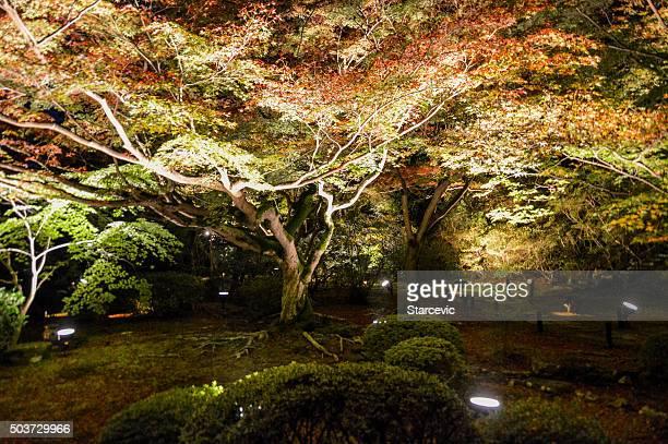 Evening illumination at Shoren-in Temple in Kyoto, Japan