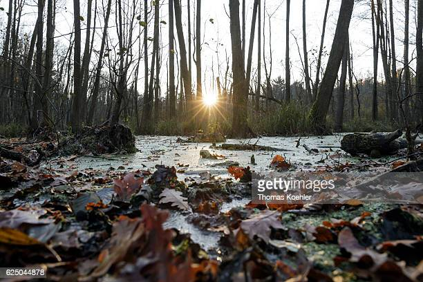 Evening mood in the Erlenbruch in the nature reserve Biesenthaler Becken on November 13 2016 in Biesenthal Germany